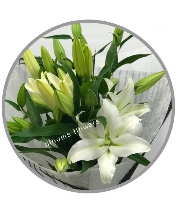 Lilliums - Oriental Lilies