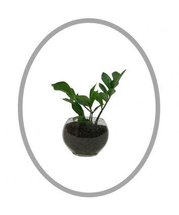 ZZ Indoor Planter